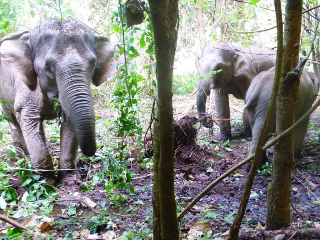 Ethical Animal Tourism | Mahout Elephants