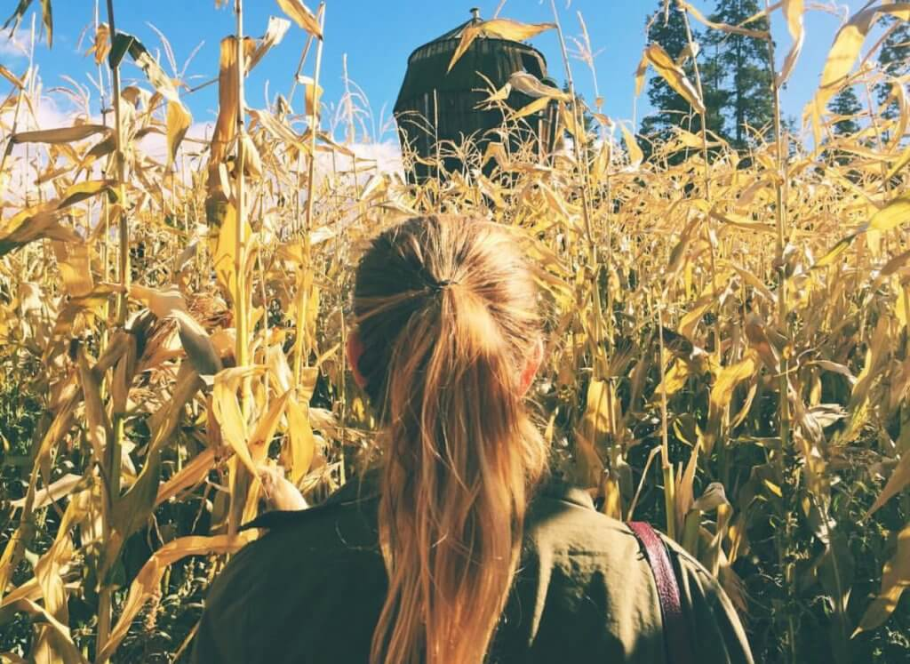 What to do in Kelowna | Fall Corn Mazes