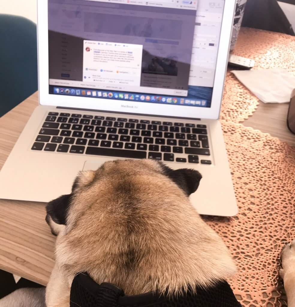 Blogging and Social Media with my pug