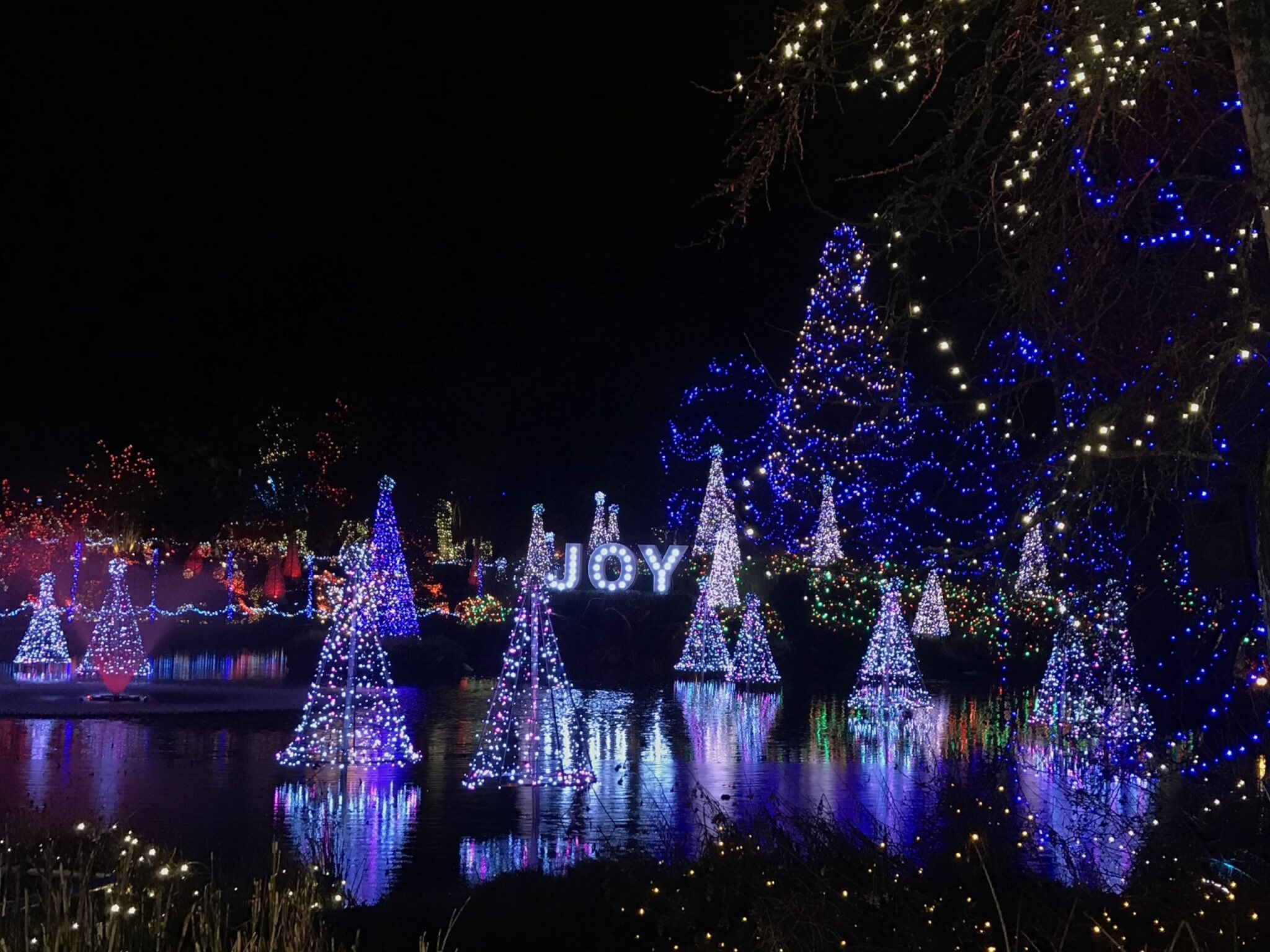 VanDusen Festival of Lights | Christmas in Vancouver