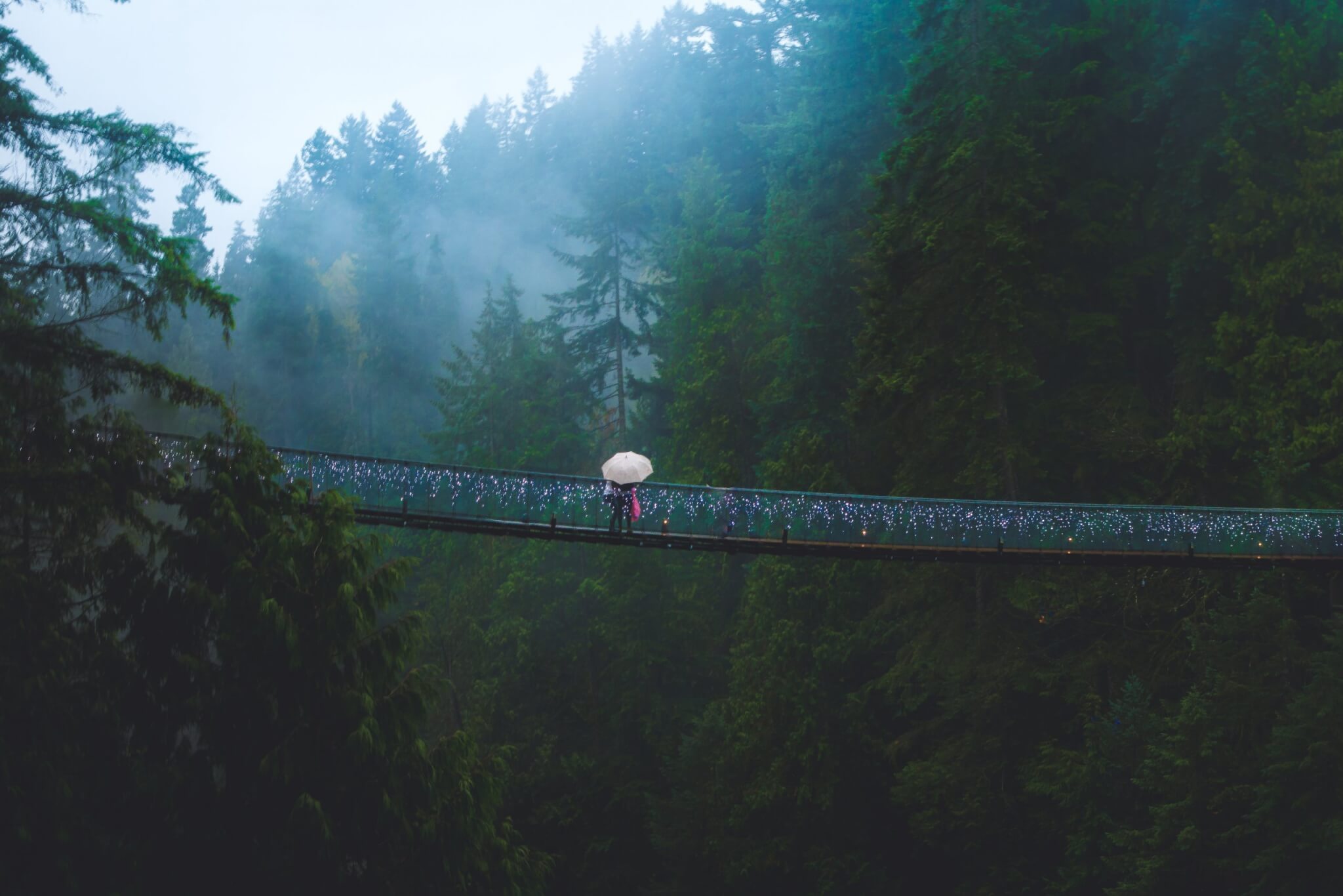 Canyon Lights - Capilano Suspension Bridges, Vancouver
