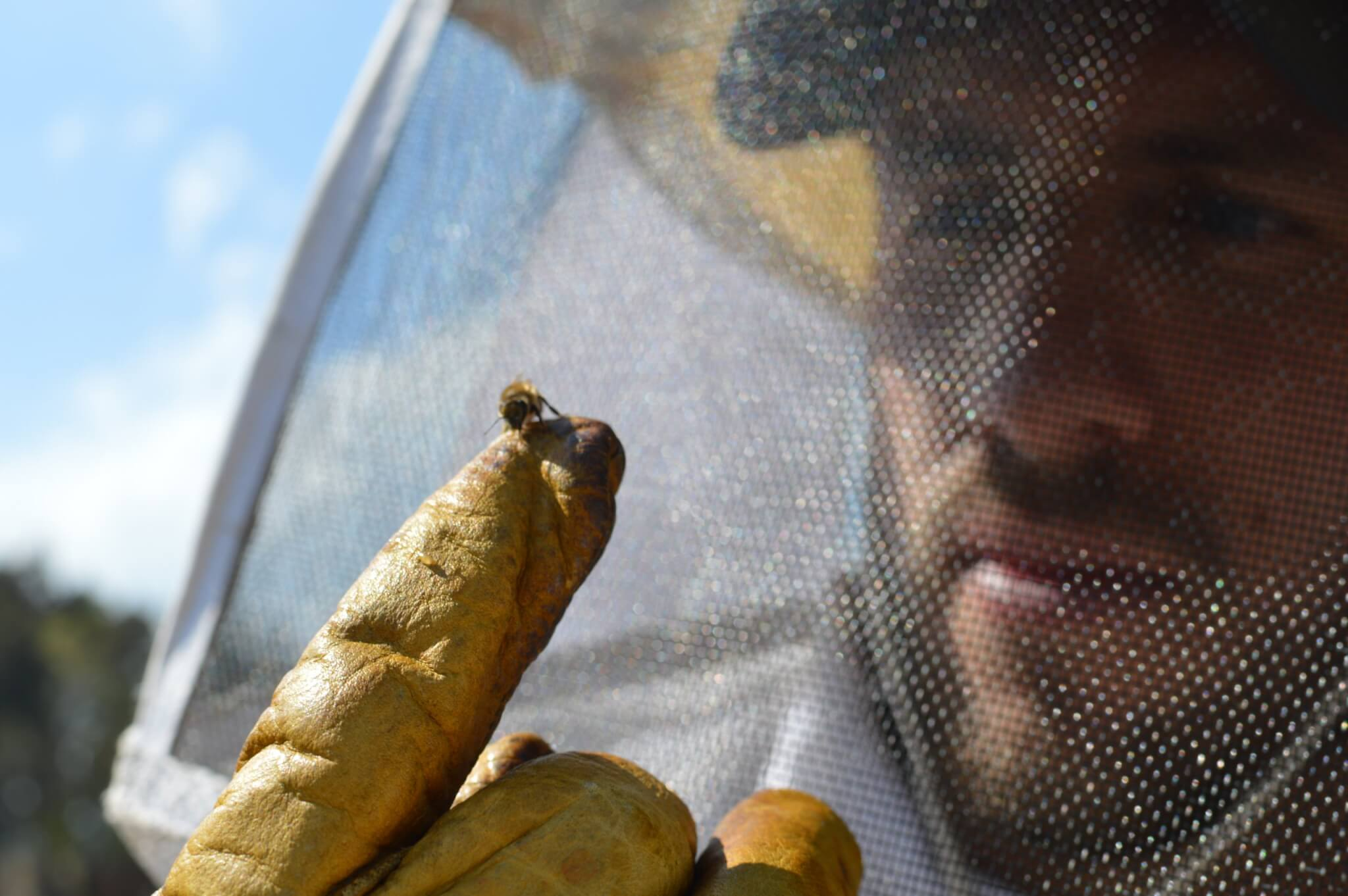 Beekeeping Experience | Apicultura Mx | Holding a Bee on a Finger