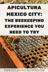Apicultura Mexico City | The Eco Beekeeping Experience You Need to Try