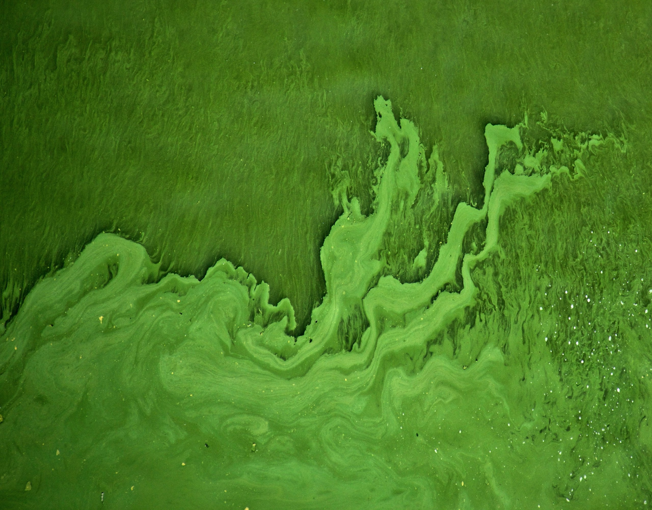Green algae water
