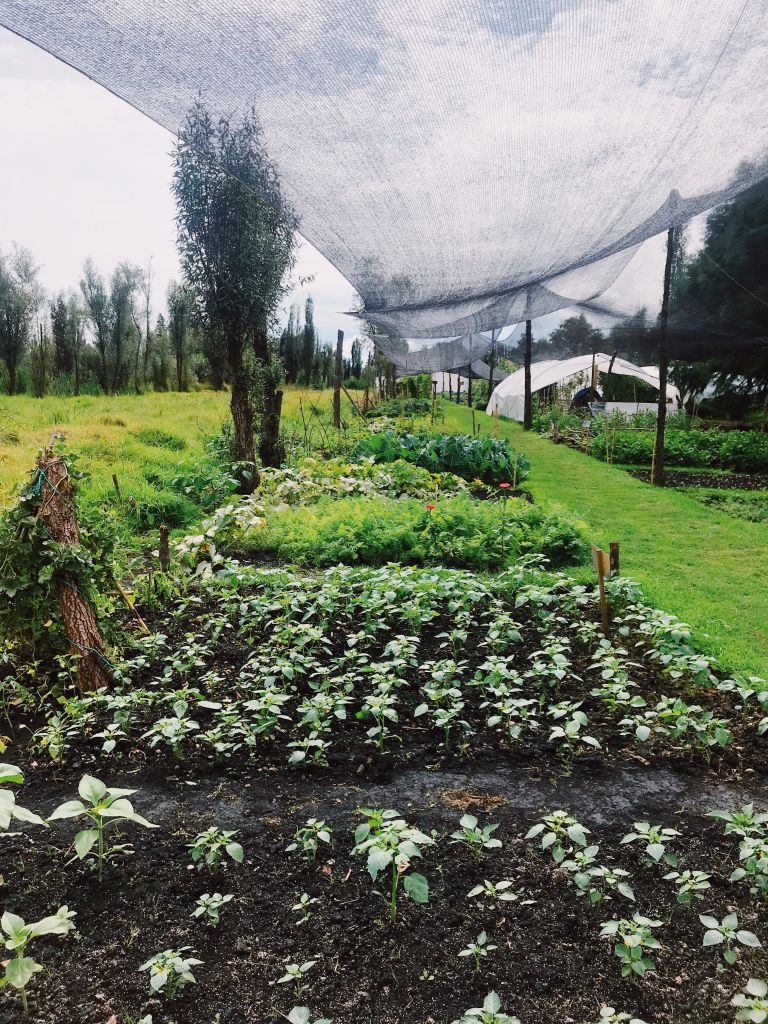 Growing Organic Veggies in Xochimilco | De La Chinampa