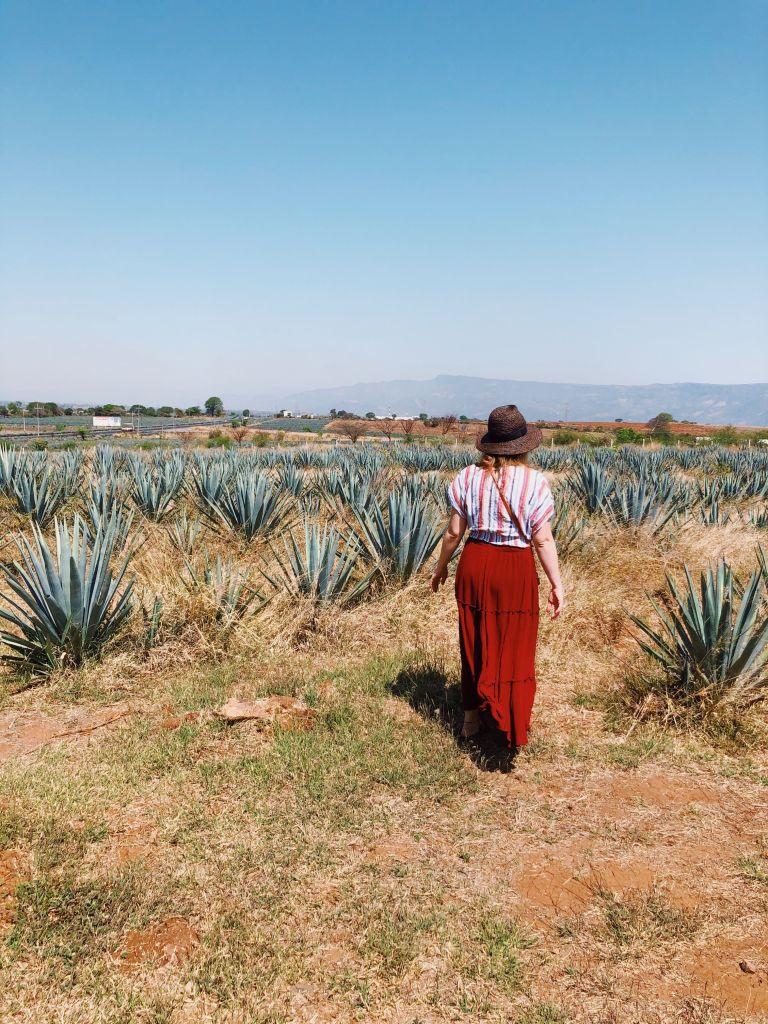Rancho Convivencia Tequilera | Jalisco