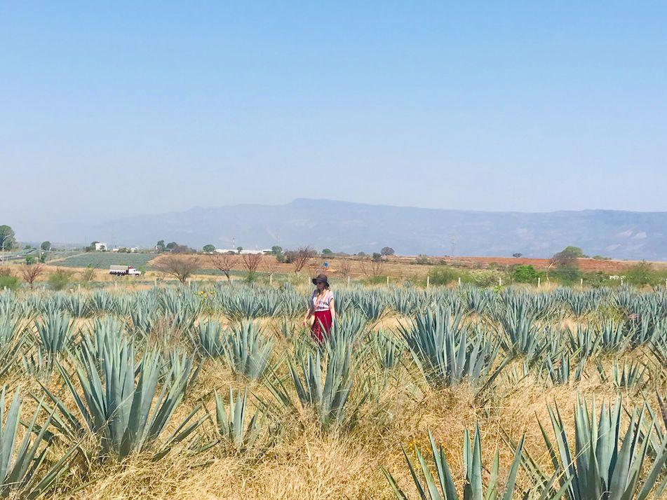 Tequila Jalisco / Pueblos Magicos in Mexico